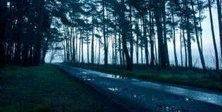 Estrada dentro da floresta após o chuveiro de chuva Imagens de Stock