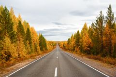 Estrada direta em uma floresta colorida Fotos de Stock