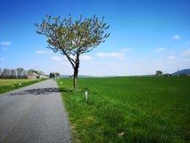 Estrada do campo com árvore de Apple fotos de stock