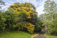 Estrada do campo do verde amarelo das árvores Imagem de Stock Royalty Free