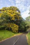Estrada do campo do verde amarelo das árvores Foto de Stock Royalty Free