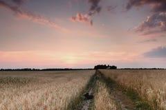 Estrada do campo no por do sol Fotografia de Stock