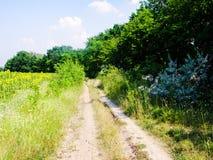 Estrada do campo do verão Imagem de Stock Royalty Free