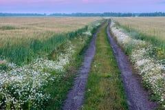 Estrada do campo do verão fora no por do sol Fotografia de Stock
