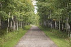 Estrada do cascalho através das árvores Fotos de Stock Royalty Free