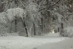 Estrada do conto de fadas na floresta coberto de neve do inverno foto de stock royalty free