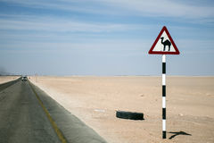 Estrada do deserto do sinal de aviso do camelo no salalah dhofar Omã Médio Oriente 4 Foto de Stock