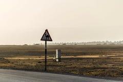 Estrada do deserto do sinal de aviso do camelo no salalah dhofar Omã Médio Oriente 5 Imagem de Stock Royalty Free