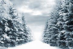 Estrada do inverno Imagem de Stock