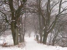 Estrada do inverno fotos de stock royalty free