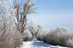 Estrada do inverno com árvores geadas e rime Fotografia de Stock
