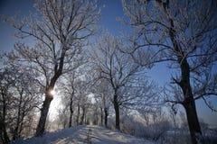 Estrada do inverno com árvores geadas e rime Foto de Stock