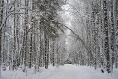 Estrada do inverno completamente da neve Fotografia de Stock