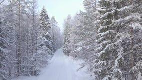 Estrada do inverno da floresta do tiro video estoque