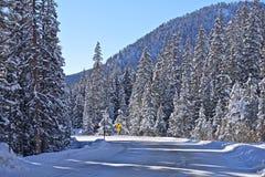 Estrada do inverno de Colorado foto de stock royalty free