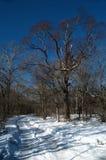 Estrada do inverno do enrolamento Foto de Stock Royalty Free