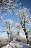 Estrada do inverno e árvores geadas paisagem Imagens de Stock