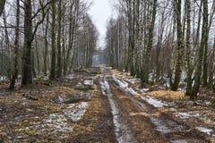 Estrada do inverno na floresta Fotos de Stock Royalty Free