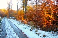Estrada do inverno na floresta fotografia de stock