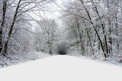 Estrada do inverno na floresta completamente da neve imagens de stock