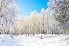Estrada do inverno no bosque imagens de stock