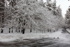 Estrada do inverno no parque Imagem de Stock
