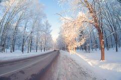 Estrada do inverno no parque no dia gelado ensolarado opinião de lente de fisheye da perspectiva da distorção imagem de stock