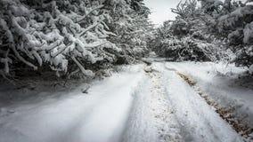 Estrada do inverno perto da floresta do pinho fotografia de stock royalty free
