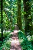 Estrada do log da árvore imagens de stock