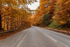 Estrada do outono Imagens de Stock