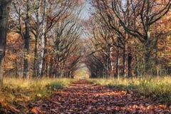 Estrada 2 do outono Imagem de Stock