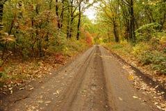 Estrada do outono fotos de stock royalty free