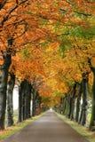 Estrada do outono foto de stock