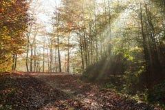A estrada do outono através da floresta com sol da parte positiva irradia Fotografia de Stock Royalty Free