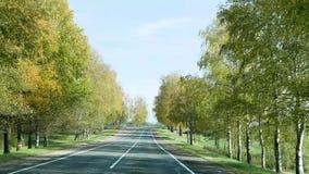 Estrada do outono para a condução de carros entre as árvores em Bielorrússia vídeos de arquivo