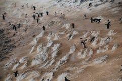 Estrada do pinguim na ilha de Paulet imagens de stock