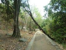 A estrada do templo velho Foto de Stock Royalty Free