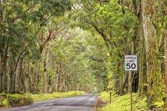 Estrada do teto da árvore de floresta da ilha de Havaí Fotos de Stock