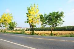 Estrada do tráfego com a fístula da cássia conhecida como a árvore de chuveiro dourado no campo Imagens de Stock Royalty Free