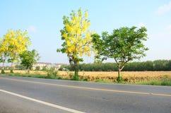 Estrada do tráfego com a fístula da cássia conhecida como a árvore de chuveiro dourado no campo Imagem de Stock Royalty Free