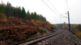 Estrada do trem na floresta fotos de stock