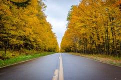 Estrada dourada Foto de Stock Royalty Free