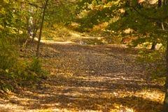 Estrada dourada da floresta do outono Imagens de Stock