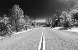 Estrada e árvores Foto de Stock