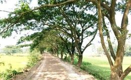 Estrada e árvores Fotos de Stock Royalty Free