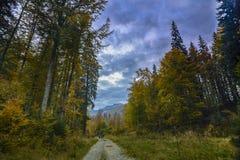 Estrada e árvores Fotografia de Stock Royalty Free
