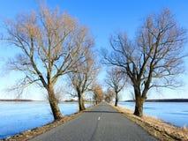 Estrada e árvores bonitas perto do campo de inundação, Lituânia fotografia de stock