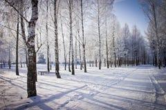A estrada e as árvores cobriram com a geada no inverno o parque da cidade Inverno Fotografia de Stock