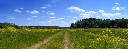 Estrada e campo rurais Foto de Stock