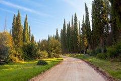 Estrada e ciprestes rochosos Imagem de Stock Royalty Free